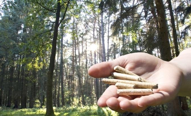 Holzpellets B1